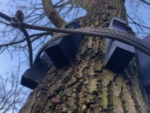 Prawidłowa ochrona drzew